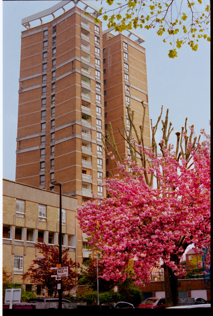 cherry blossom and council houses